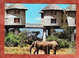 Elefanten (55783) - Elefanten
