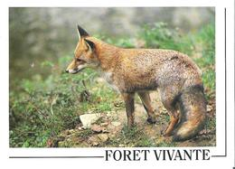 ORLEANS. 2 CP Naturalistes Orléanais Renard Roux Série Forêt Vivante N°2 Photo J. Cortot - Orleans