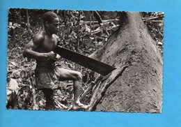 AEF 02 - Tronçonnage De L'Okoumé - Bûcheron - Gabon