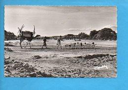DJI 02 - Djibouti - Le Visage Du Pays Somal - Caravane - Dromadaire Chèvre - Djibouti