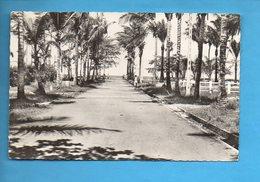 GAB 03 - Gabon - Port Gentil - L'Allée Des Cocotiers - Gabon