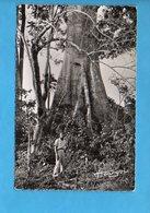 GAB 12 - Gabon - Flore Africaine - Le Fromager - Gabon