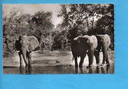 GAB 19 - Gabon - Faune Africaine - Eléphants à La Rivière - Gabon