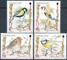 Gibraltar  Vogels - Songbirds & Tree Dwellers