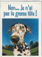 CARTE DE VOEUX - NON... JE N'AI PAS LA GROSSE TETE ! - Non Ecrite - Stagioni & Feste