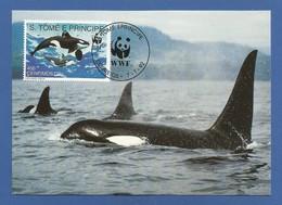 SäoTome E Principe  1992 , Killer Whale - WWF Maximum Card - First Day 7-1.1992 - Sao Tome And Principe