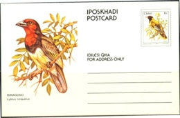 BIRDS- BLACK COLLARED BARBET -PRE PAID PICTURE POST CARD-CISKEI- MC-52 - Songbirds & Tree Dwellers