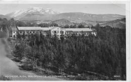 AK 0005  Hochegg - Waldpension Mit Schneeberg / Verlag Ledermann Um 1962 - Neunkirchen