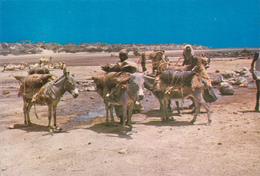 DJIBOUTI / POINT D'EAU VERS DORALE / VUE UNIQUE / ANES - Djibouti