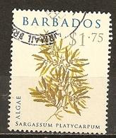 Barbados 20-- Algae Plant Obl - Barbados (1966-...)