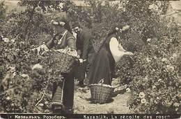 Pays Div : Ref M489- Bulgarie - Kazanlik Ou Kazanlak - Fleurs - La Recolte Des Roses  - Carte Bon Etat  - - Bulgaria