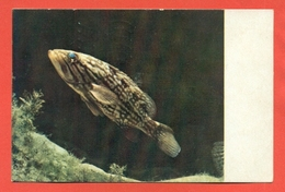 ANIMALI -PESCI -CERNIA - Pesci E Crostacei