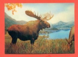 CARTOLINE TRIDIMENSIONALI -ANIMALI -ALCI - Cartoline Stereoscopiche