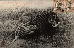 C. TONKIN TIGRE SURPRIS A L AFFUT AUX ENVIRONS DE HUNG HOA - Viêt-Nam