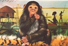 CHARLOTTE ZOO DE LA PALMYRE - Monos