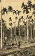 THUDAUMOT  Plantation D'Aréquers Enfants RV - Viêt-Nam
