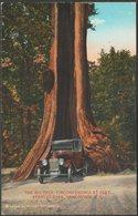 The Big Tree, Stanley Park, Vancouver, British Columbia, C.1925 - Coast Publishing Co Postcard - Vancouver