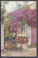 BAHAMAS  ,  Nassau  , DONKEY ,   OLD  POSTCARD - Postcards