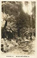 Pays Div : Ref M350- Australie - Australia - The Glem , South Sassafras - Victoria  - Carte Bon Etat - - Australie