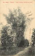 Pays Div : Ref M324- Viet Nam - Vietnam -tonkin - Caobang -touffe De Bambou Royal Pres Du Cercle - Carte Bon Etat - - Viêt-Nam