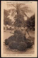 COTE D'IVOIRE // RECOLTE D'AMANDES DE PALMES - PHOTOTYPIE LESCUYER LYON N°20 - Ivory Coast