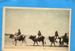 TCHAD-les Boeufs Porteurs Du Tchad -petite Caravane -plan Animé-carte Cie Navigation Fabre-années 1910-20- - Tchad