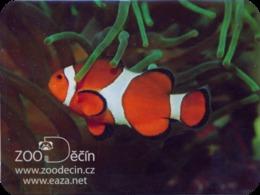 Zoo Decin (CZ) - Clown Fish - Animaux & Faune