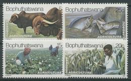 Bophuthatswana 1979 Landwirtschaft Rinder Baumwolle Mais 51/54 Postfrisch - Bophuthatswana