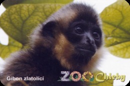 Zoo Chleby (CZ) - Gibbon Baby - Animaux & Faune