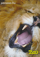 Zoo Pecs (HU) - Lion - Animals & Fauna