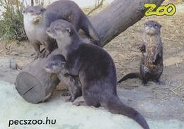 Zoo Pecs (HU) - Otter - Animals & Fauna