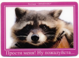 Zoo Limpopo Nizhniy Novgorod (RU) - Raccoon - Animaux & Faune