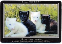 Zoo Limpopo Nizhniy Novgorod (RU) - Polar Fox - Animals & Fauna