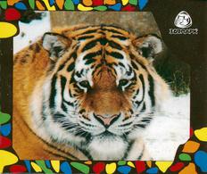 Zoo Izhevsk (RU) - Tiger - Animaux & Faune