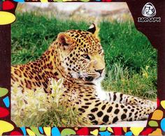 Zoo Izhevsk (RU) - Leopard - Animaux & Faune
