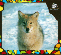 Zoo Izhevsk (RU) - Wolf - Animals & Fauna