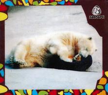 Zoo Izhevsk (RU) - Polar Bear - Animaux & Faune