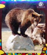 Zoo Izhevsk (RU) - Bear - Animals & Fauna