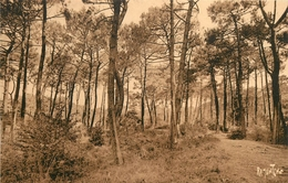 OLERON FORET DE SAINT TROJAN - Ile D'Oléron