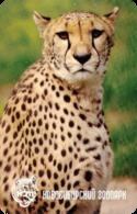 Zoo Nvosibirsk (RU) - Cheetah - Animaux & Faune