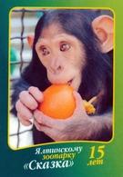 Zoo Skazka Yalta (UA / RU - Crimea) - Chimpanzee - Animaux & Faune