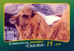 Zoo Skazka Yalta (UA / RU - Crimea) - Camel - Animals & Fauna