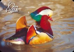 Zoo Kishinev (MD) - Mandarine Duck - Animals & Fauna