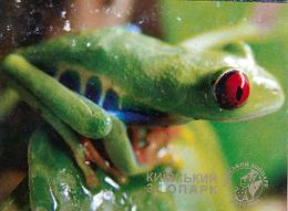 Zoo Kiev (UA) - Frog - Animaux & Faune
