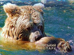 Zoo Kiev (UA) - Bear - Animaux & Faune