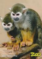 Zoo Pecs (HU) - Squirrel Monkey - Animals & Fauna