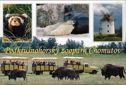 Zoopark Chomutov (CZ) - Marbled Polecat, Seal, Wisent, Mill - Animaux & Faune