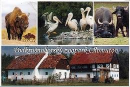 Zoopark Chomutov (CZ) - Wisent, Pelican, Buffalo, Farm - Animals & Fauna