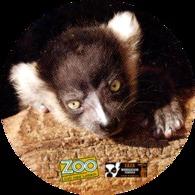 Zoo Usti Nad Labem (CZ) - Baby Black And White Lemur - Animaux & Faune