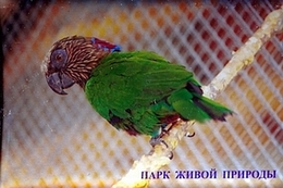 """Park Of Living Nature """"Dodo"""" Anapa (RU) - Parrot - Animaux & Faune"""